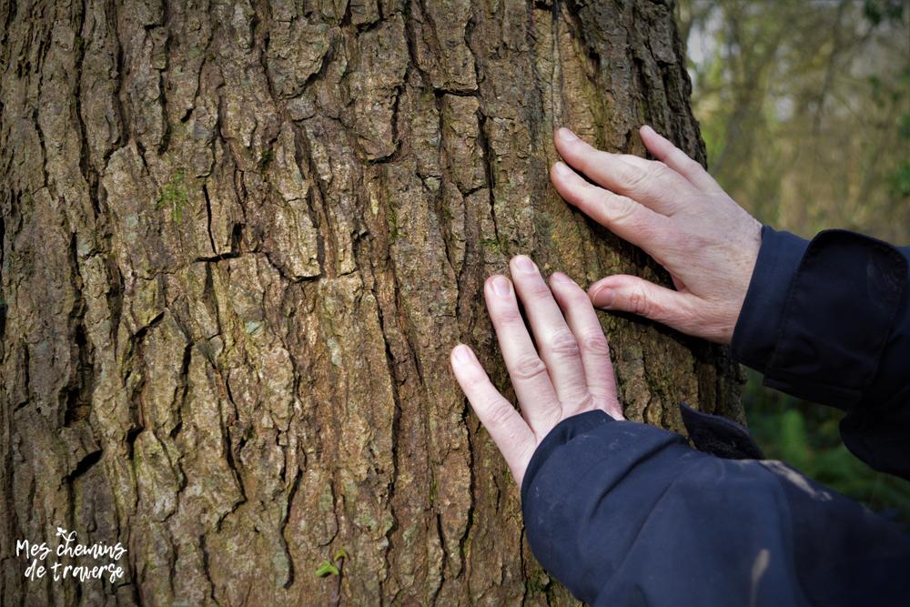Se ressourcer au contact des arbres