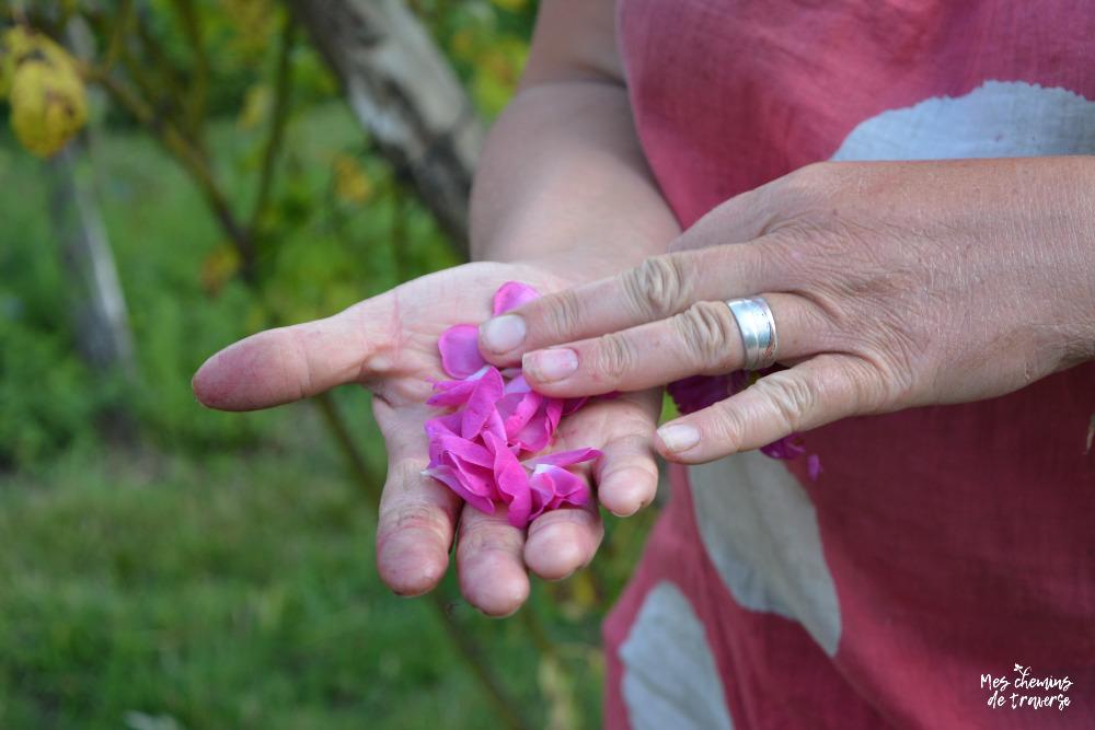 pétales de rose, herbes vagabondes, trégor